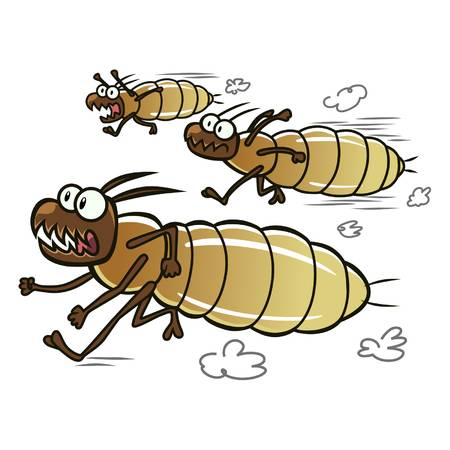 Ugly Termite